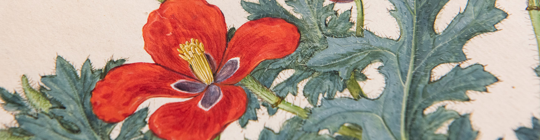A detail of a painted flower - with red petals and a green stem