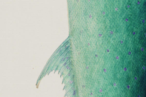 A watercolour painting of green and blue fish scales from Bodleian Library MS. Sherard 238
