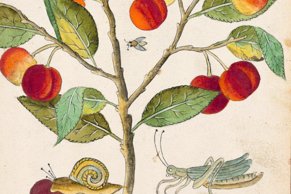 A drawing of a tree with green leaves and red hanging fruit, a snail and a grasshopper are on the ground underneath the leaves