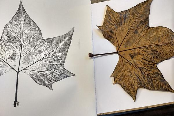 A maple leaf positioned beside a black and white printed version of that leaf