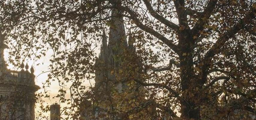 A spire seen through leaves of a tree