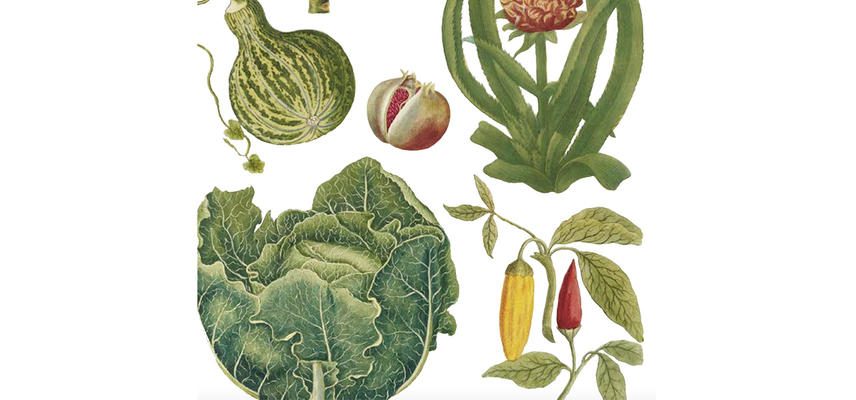 A series of illustrated plants and vegetables on a white background